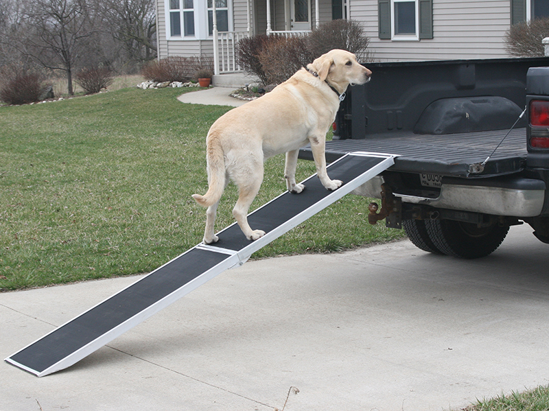 Help them into your vehicle with a pet ramp