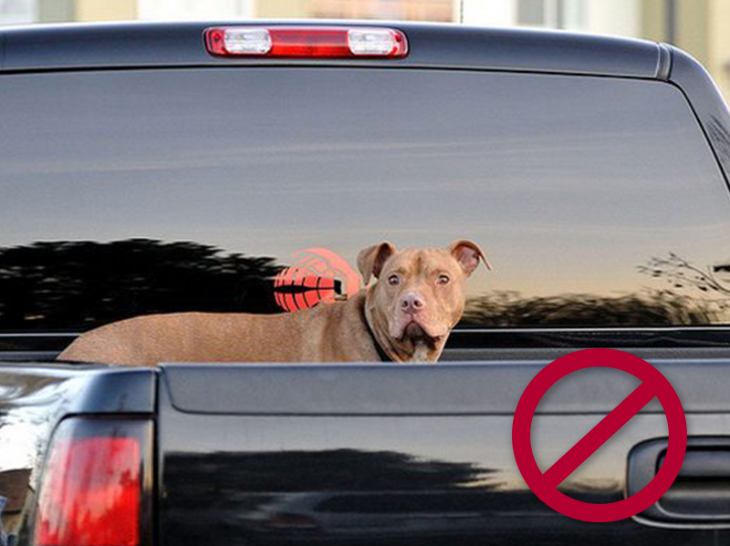 Don't let your dog stick its head out of the window