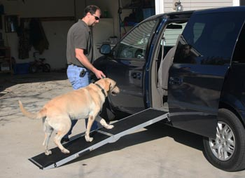 Dog going up ramp into van
